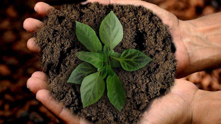Bild zum Thema Bioökonomie auf der Website von Algenium - Mikroalgen Made in Germany